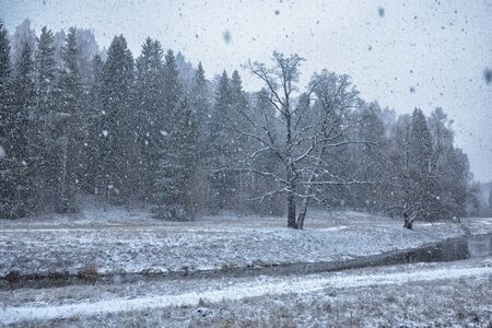 The first snow fell in the forest.Winter came cold and frosty.