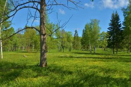 Green meadow in the middle of the forest. Around growing grass and trees.