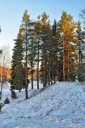Morning in the forest in winter.Fresh air. Frost. Snow covered earth.