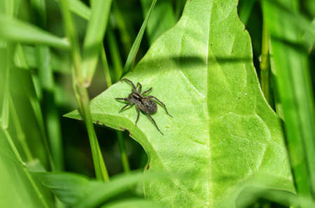 Summer activity of insects.A spider knits a web. Foto de archivo