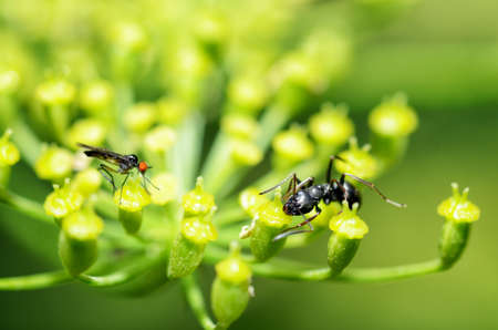 Plants bloom in summer. Various insects feed on plant pollen.