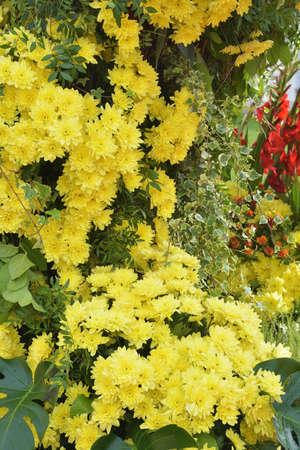 Flower arrangement with chrysanthemums.These are beautiful autumn flowers. Reklamní fotografie