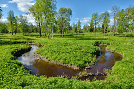 Beautiful nature in the forest with green vegetation.A small winding river flows here. Reklamní fotografie