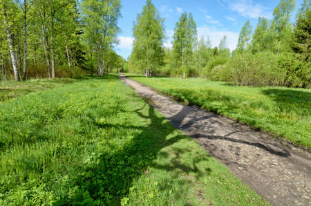 Beautiful landscape in the forest.Plants grow actively in spring. Reklamní fotografie