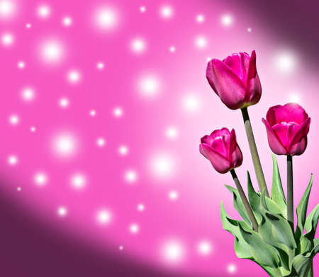 Tulips spring flowers on a pink background with stars and a vignette.