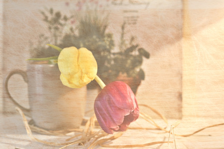 tulips in a cup - vintage