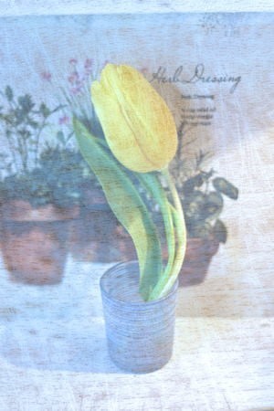 yellow tulip - vintage