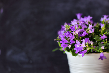 white vintage vase with a bunch of flowers on grunge background