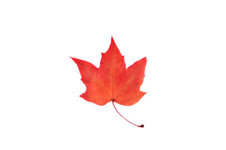 Backdrop of colorful autumn transparent leaf. Flat lay, top view. Autumn, fall concept.
