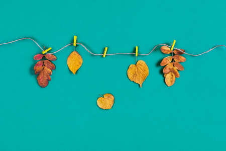 Autumn composition. Different dry leaves on turquoise isolated background. Flat lay, top view.