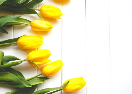 Beautiful fresh spring tulips on a white background. flat lay.