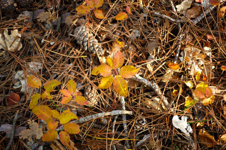 land in the autumn forest: cones, needles, yellowed leaves.