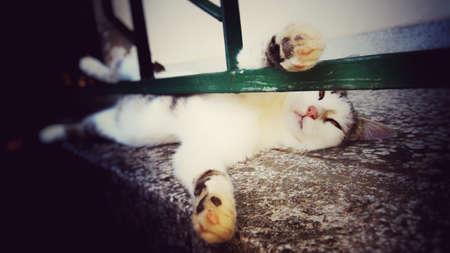 Cat sleeping  on the porch
