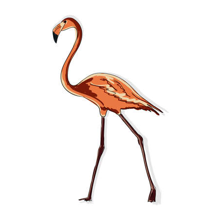 Vector image of a full-length pink flamingo. Animalistic digital sketch. Animal drawn by hand on a white background