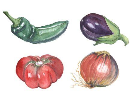 verduras: hortalizas y verduras de especias
