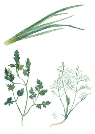 condiment: parsley, dill, onion.