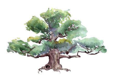 oak watercolor 版權商用圖片 - 47355459