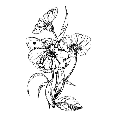 cosmos flower: hand drawn ink floral ornament with flowers marigolds and cosmos on white background. butterfly on a flower.