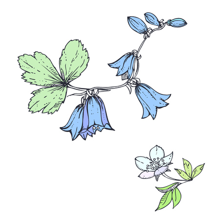bluebell: hand drawn ink floral ornament with flowers bluebell and leaves