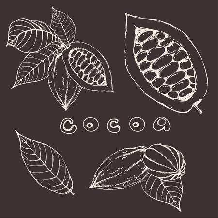 hand drawn ink cocoa beans. vector illustration of leaves and fruits of cocoa beans. Vector eps 10 cocoa beans. Vektoros illusztráció
