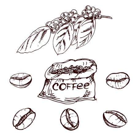 手描きのコーヒー豆、コーヒー豆のスケッチ。ベクトル描画