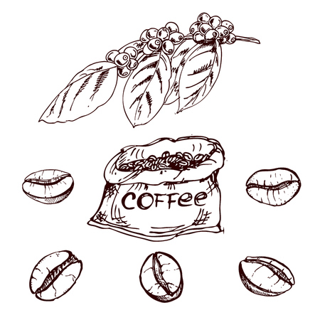icon collection: hand drawn coffee beans, sketch of coffee beans. vector drawing