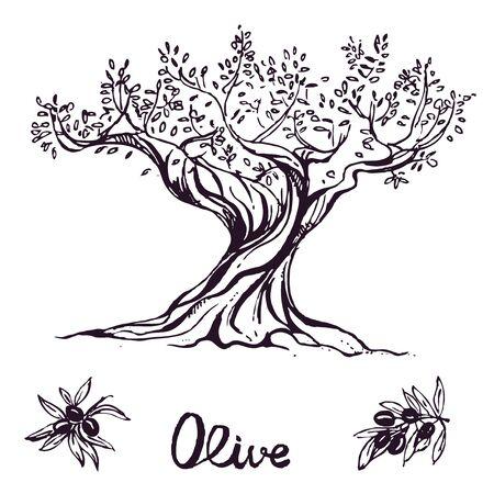 disegnata a mano albero di inchiostro di oliva. vettoriale eps 10