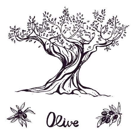 hand drawn ink olive tree. vector eps 10