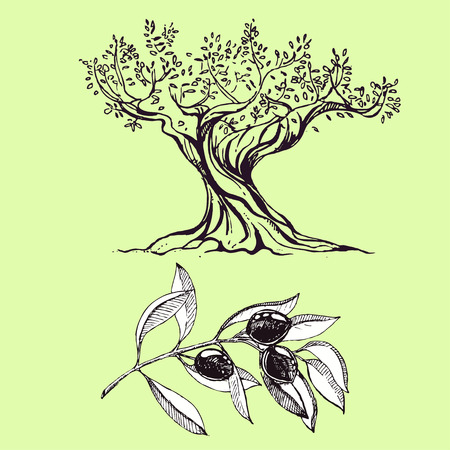 olive tree: hand drawn ink olive branch, olive tree. vector eps 10 Illustration