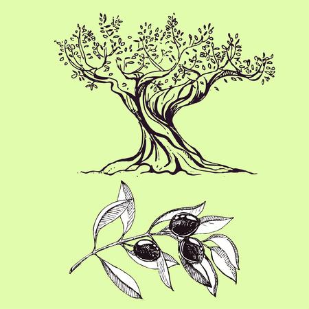 hand drawn ink olive branch, olive tree. vector eps 10 Illustration