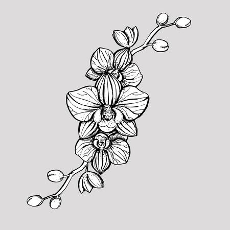 Hand gezeichnet Tinte floralen Ornament mit Blumen Orchidee. Vektor eps 10