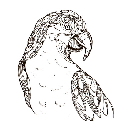 hand drawn ink doodle parrot on white background. Coloring page - zendala, design for adults, poster, print, t-shirt, invitation, banners, flyers.