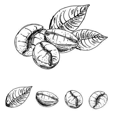 Granos de café de tinta hechos a mano, boceto de granos de café. vector eps 10 Foto de archivo - 57337101