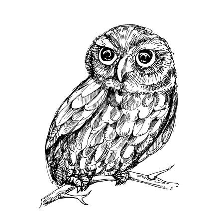 sketch: illustration of owl. sketch.