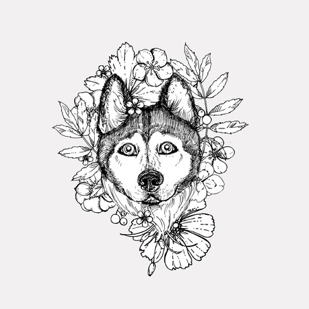 illustration dog husky. sketch. Illustration