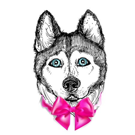 pink bow: illustration dog husky and pink bow. sketch.