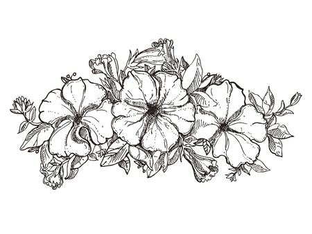black and white  floral ornament with petunia flower. sketch. Illustration