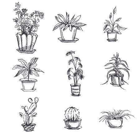 houseplants in pot set. Plant art graphic, element floral houseplant. illustration. Illustration