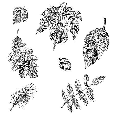 mountain ash: black and white doodle leaves of mountain ash, oak, apple tree, pine branch .