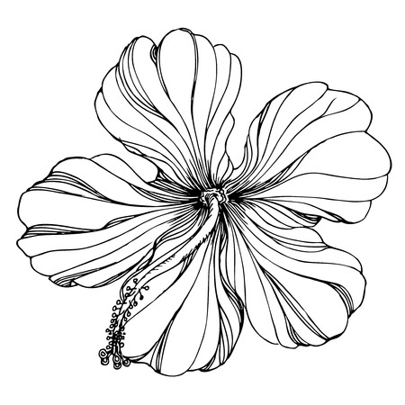 hibiscus flower: black and white floral ornament with hibiscus flower.