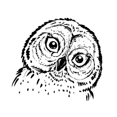 hand drawn ink illustration owl. vector eps 8
