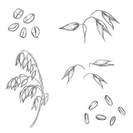 手描き、オート麦、オートミール、オート麦粒のセットです。スケッチします。ベクター eps 8  イラスト・ベクター素材