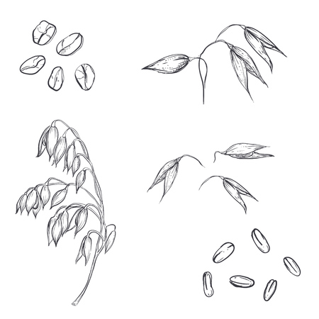 Hand drawn set of oats, oatmeal, oat grain. sketch. Vector eps 8