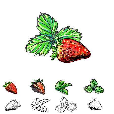 Hand drawn vector illustration set of color and monochrome strawberry, leaf. sketch. Vector eps 8