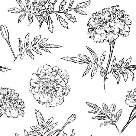 hand drawn vector seamless pattern of marigold flowers