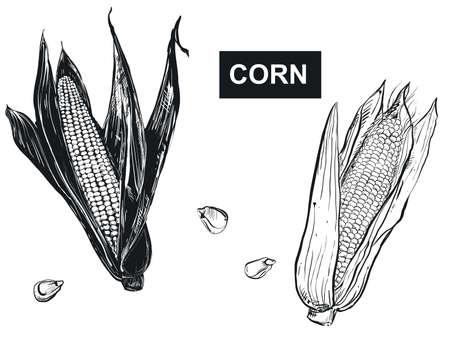 Hand drawn vector illustration set of black corn, grain. sketch. Vector eps 8