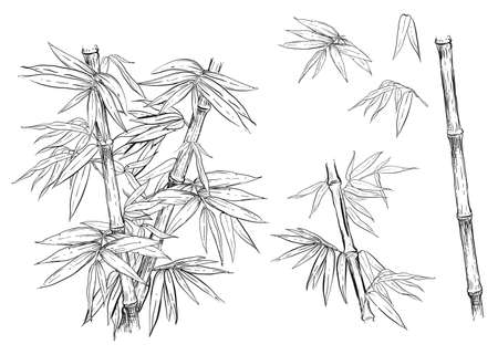 Hand drawn black and white vector illustration set of bamboo, leaf. sketch.