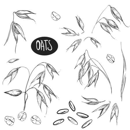Detailed hand drawn black and white illustration set of oat, grain, oatmeal, leaf. sketch. Vector. Elements in graphic style label, card, sticker, menu, package.