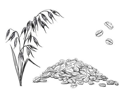 Detailed hand drawn ink black and white illustration set of oat, grain, oatmeal, leaf. sketch. Vector. Elements in graphic style label, card, sticker, menu, package