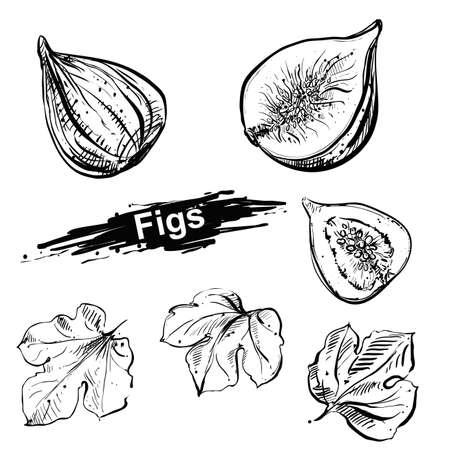 Hand drawn illustration set of fig, leaf. sketch. Vector eps 8 Vecteurs